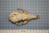http://mczbase.mcz.harvard.edu/specimen_images/mammalogy/large/38619_vulpes_macrotis_tenuirostris_hd.jpg