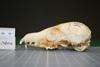 http://mczbase.mcz.harvard.edu/specimen_images/mammalogy/large/38620_vulpes_macrotis_nevadensis_hl.jpg