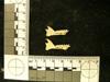 http://mczbase.mcz.harvard.edu/specimen_images/mammalogy/large/38915_Galago_senegalensis_zanzibaricus_ml2.jpg