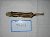http://mczbase.mcz.harvard.edu/specimen_images/mammalogy/large/39141_Poecilogale_albinucha_doggetti_d.jpg