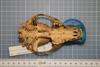 http://mczbase.mcz.harvard.edu/specimen_images/mammalogy/large/41096_Speothos_venaticus_hv.jpg