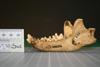 http://mczbase.mcz.harvard.edu/specimen_images/mammalogy/large/41096_Speothos_venaticus_ml.jpg