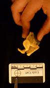 http://mczbase.mcz.harvard.edu/specimen_images/mammalogy/large/41417_Hylobates_lar_lar_scap-glen.jpg