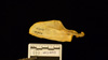 http://mczbase.mcz.harvard.edu/specimen_images/mammalogy/large/41417_Hylobates_lar_lar_scap-pos.jpg