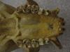 http://mczbase.mcz.harvard.edu/specimen_images/mammalogy/large/41427_hylobates_lar_lar_hv.jpg