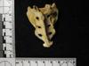 http://mczbase.mcz.harvard.edu/specimen_images/mammalogy/large/41427_hylobates_lar_lar_sacrum.jpg