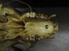 http://mczbase.mcz.harvard.edu/specimen_images/mammalogy/large/41481_hylobates_lar_lar_hv.jpg