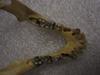 http://mczbase.mcz.harvard.edu/specimen_images/mammalogy/large/41497_hylobates_lar_lar_jd.jpg