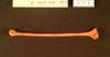 http://mczbase.mcz.harvard.edu/specimen_images/mammalogy/large/41498_Hylobates_lar_lar_Rhum_d.jpg