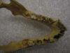 http://mczbase.mcz.harvard.edu/specimen_images/mammalogy/large/41499_hylobates_lar_lar_jd.jpg