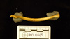 http://mczbase.mcz.harvard.edu/specimen_images/mammalogy/large/41565_Hylobates_lar_vestitus_clav-pos.jpg