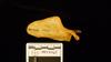 http://mczbase.mcz.harvard.edu/specimen_images/mammalogy/large/41565_Hylobates_lar_vestitus_scap-ant.jpg