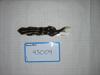 http://mczbase.mcz.harvard.edu/specimen_images/mammalogy/large/43009_Spilogale_putoris_elata_d.jpg