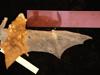 http://mczbase.mcz.harvard.edu/specimen_images/mammalogy/large/43604_Lasiurus_borealis_borealis_d.jpg