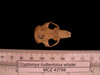 http://mczbase.mcz.harvard.edu/specimen_images/mammalogy/large/43798_Cryptomys_hottentotus_whytei_hd.jpg