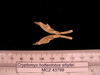 http://mczbase.mcz.harvard.edu/specimen_images/mammalogy/large/43799_Cryptomys_hottentotus_whytei_md.jpg