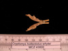 http://mczbase.mcz.harvard.edu/specimen_images/mammalogy/large/43800_Cryptomys_hottentotus_whytei_md.jpg