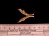 http://mczbase.mcz.harvard.edu/specimen_images/mammalogy/large/43801_Cryptomys_hottentotus_whytei_md.jpg