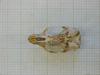 http://mczbase.mcz.harvard.edu/specimen_images/mammalogy/large/43947_Otomys_typus_uzungwensis_hv.jpg