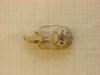http://mczbase.mcz.harvard.edu/specimen_images/mammalogy/large/43950_Otomys_typus_uzungwensis_hd.jpg
