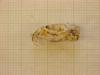 http://mczbase.mcz.harvard.edu/specimen_images/mammalogy/large/43950_Otomys_typus_uzungwensis_hl.jpg