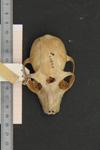 http://mczbase.mcz.harvard.edu/specimen_images/mammalogy/large/44899_Lemur_rubriventer_hd.jpg