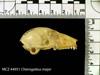 http://mczbase.mcz.harvard.edu/specimen_images/mammalogy/large/44951_Cheirogaleus_major_hl2.jpg