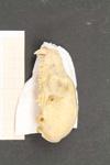 http://mczbase.mcz.harvard.edu/specimen_images/mammalogy/large/45127_Lemus_fulvus_fulvus_hl.jpg
