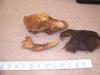 http://mczbase.mcz.harvard.edu/specimen_images/mammalogy/large/47444_Canis_familiaris_hl4.jpg