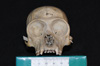 http://mczbase.mcz.harvard.edu/specimen_images/mammalogy/large/5070_Brachyteles_arachnoides_hf.jpg