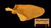 http://mczbase.mcz.harvard.edu/specimen_images/mammalogy/large/50958_Pongo_pygmaeus_scap-pos.jpg