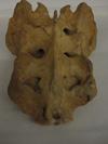 http://mczbase.mcz.harvard.edu/specimen_images/mammalogy/large/50960_pongo_pygmaeus_Sacrum2.jpg