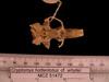http://mczbase.mcz.harvard.edu/specimen_images/mammalogy/large/51472_Cryptomys_hottentotus_whytei_cf_hv.jpg