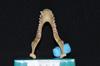 http://mczbase.mcz.harvard.edu/specimen_images/mammalogy/large/5324_Alouatta_palliata_palliata_md.jpg