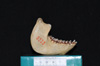 http://mczbase.mcz.harvard.edu/specimen_images/mammalogy/large/5325_Alouatta_palliata_palliata_ml2.jpg