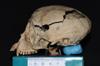 http://mczbase.mcz.harvard.edu/specimen_images/mammalogy/large/5337_Ateles_geoffroyi_geoffroyi_hl.jpg