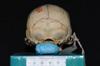 http://mczbase.mcz.harvard.edu/specimen_images/mammalogy/large/5351_Ateles_geoffroyi_geoffroyi_hp.jpg