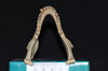 http://mczbase.mcz.harvard.edu/specimen_images/mammalogy/large/5351_Ateles_geoffroyi_geoffroyi_jd.jpg