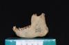 http://mczbase.mcz.harvard.edu/specimen_images/mammalogy/large/5355_Ateles_geoffroyi_geoffroyi_jl2.jpg