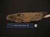 http://mczbase.mcz.harvard.edu/specimen_images/mammalogy/large/56843_Ochotona_hyperborea_yesoensis_v.jpg
