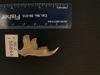 http://mczbase.mcz.harvard.edu/specimen_images/mammalogy/large/56844_Ochotona_hyperborea_yesoensis_ml.jpg