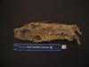 http://mczbase.mcz.harvard.edu/specimen_images/mammalogy/large/56844_Ochotona_hyperborea_yesoensis_v.jpg