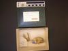 http://mczbase.mcz.harvard.edu/specimen_images/mammalogy/large/57946_Bradypus_variegatus_hl.jpg