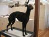 http://mczbase.mcz.harvard.edu/specimen_images/mammalogy/large/58012_Canis_familiaris_l2.jpg