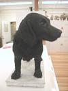 http://mczbase.mcz.harvard.edu/specimen_images/mammalogy/large/58659_Canis_familiaris_hf2.jpg