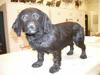 http://mczbase.mcz.harvard.edu/specimen_images/mammalogy/large/58659_Canis_familiaris_l.jpg