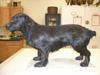 http://mczbase.mcz.harvard.edu/specimen_images/mammalogy/large/58659_Canis_familiaris_l2.jpg