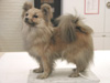 http://mczbase.mcz.harvard.edu/specimen_images/mammalogy/large/59309_Canis_familiaris_l.jpg