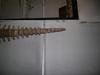 http://mczbase.mcz.harvard.edu/specimen_images/mammalogy/large/59412_hydrodamalis_gigas_caud-v2.jpg