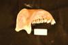 http://mczbase.mcz.harvard.edu/specimen_images/mammalogy/large/60935_Colobus_guereza_ml.jpg